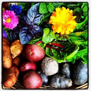 groenten uit tuin