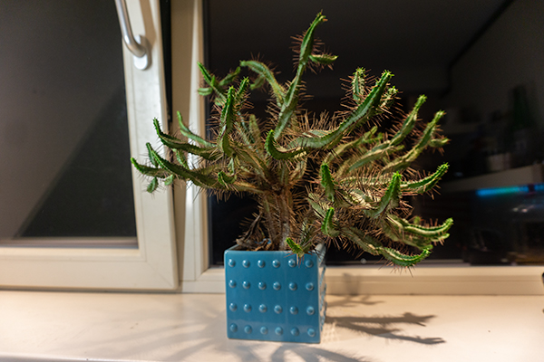 Studentenkamer6 cactus